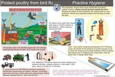 Poster / chart on protect poultry from bird flu by practicing hygiene