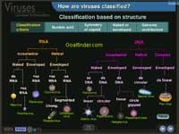 Classification of virus